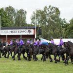 Camping, Friser heste