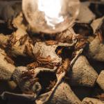 Fremtidens fødevarer - SyngJa – Insekter_Plænen_Vice Munchies Crickets